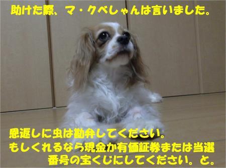 010_convert_20130926161227.jpg