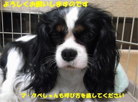 010_convert_20130927185538.jpg