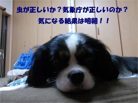 010_convert_20131015170905.jpg
