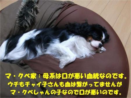 010_convert_20131018171210.jpg