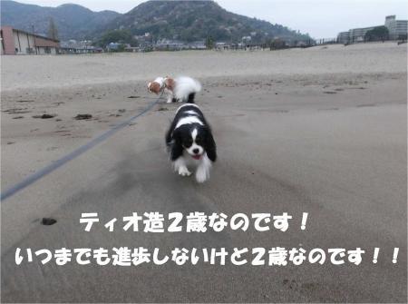 011_convert_20130401181736.jpg