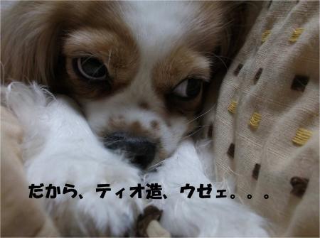 011_convert_20130412172511.jpg