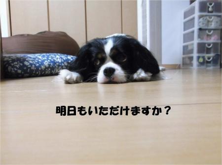 011_convert_20130619171330.jpg