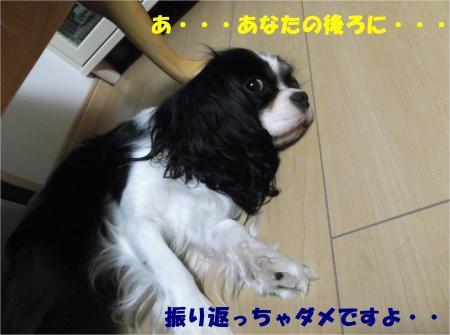 011_convert_20130725190909.jpg