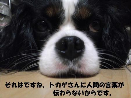 011_convert_20130926161239.jpg