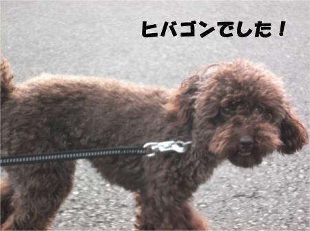 011_convert_20130930093509.jpg