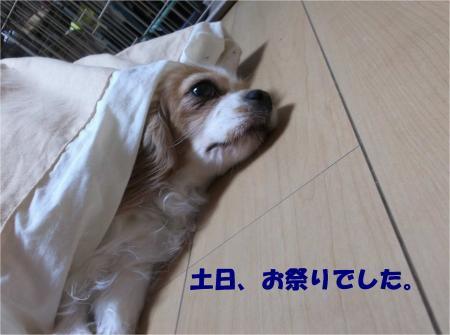 011_convert_20131022173517.jpg