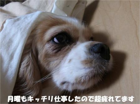 013_convert_20131022173538.jpg