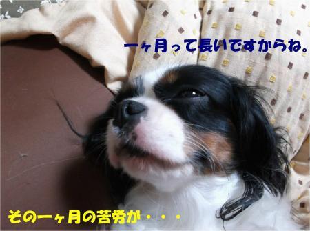 014_convert_20131022173547.jpg