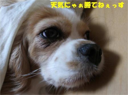 016_convert_20131022173608.jpg
