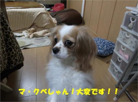 01_convert_20130405192512.jpg