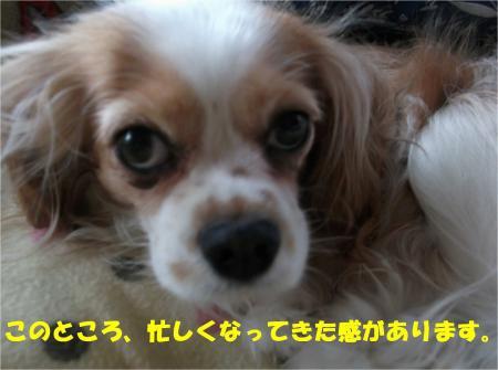 01_convert_20130522191810.jpg