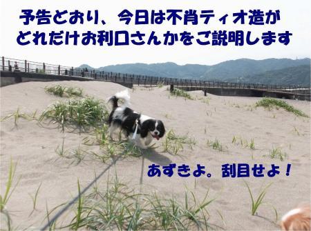 01_convert_20130527173852.jpg