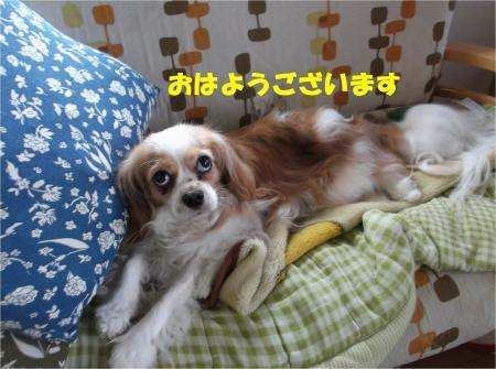 01_convert_20130614180202.jpg