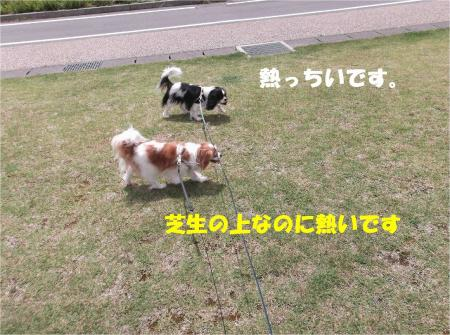 01_convert_20130617180128.jpg
