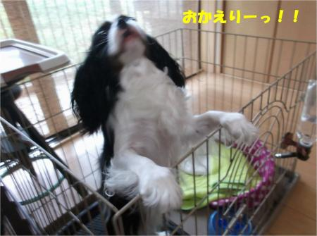 01_convert_20130621175845.jpg