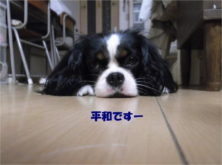 01_convert_20130731170832.jpg