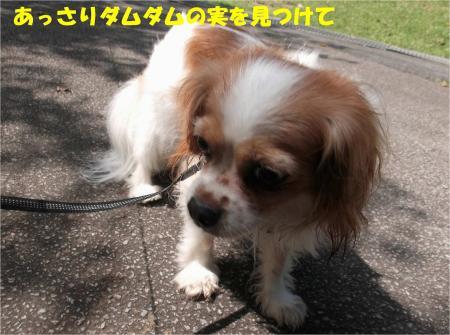 01_convert_20130924171258.jpg