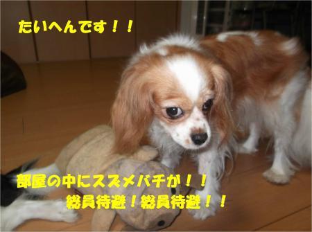 01_convert_20130926161047.jpg