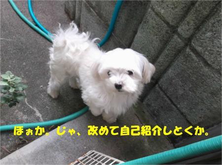 01_convert_20130927185401.jpg