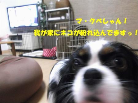 01_convert_20131002182524.jpg