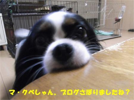 01_convert_20131004193613.jpg