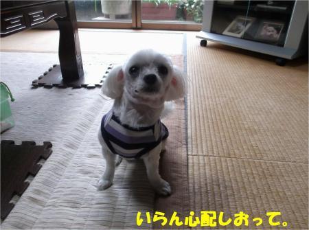 01_convert_20131005145946.jpg