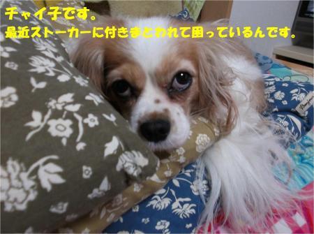 01_convert_20131210174051.jpg