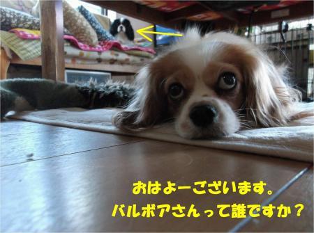 02-2_convert_20131212173807.jpg