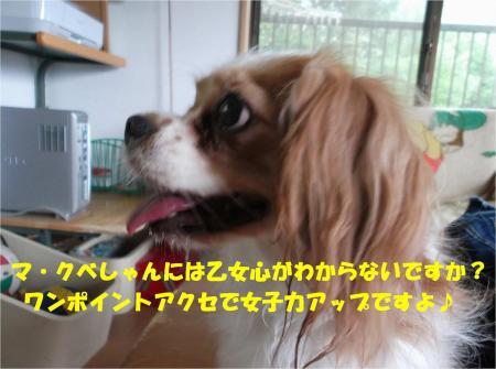 021_convert_20130917161804.jpg