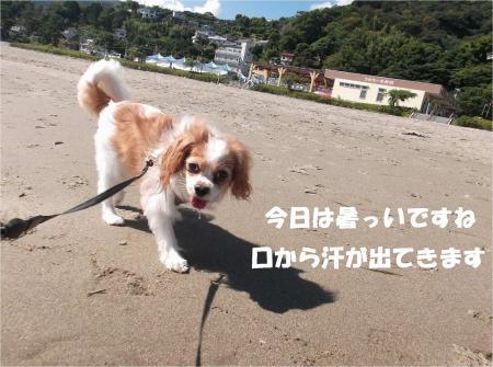 022_convert_20130930093538.jpg