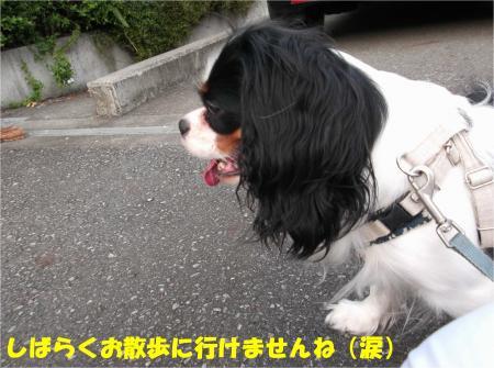 028_convert_20131001132149.jpg