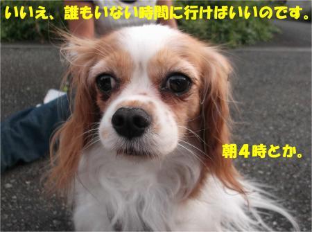 029_convert_20131001132137.jpg