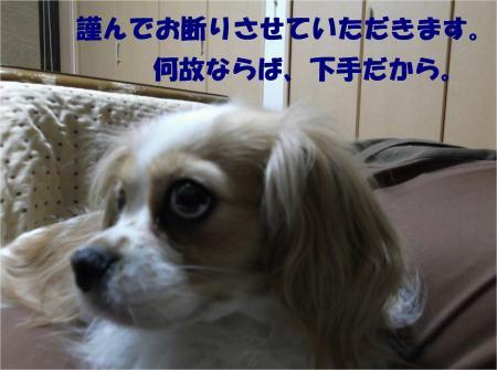 02_convert_20130328195255.jpg
