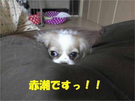 02_convert_20130405192525.jpg