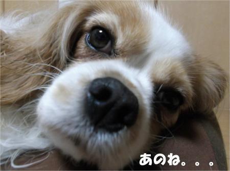 02_convert_20130409170527.jpg
