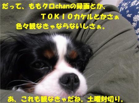 02_convert_20130411163831.jpg