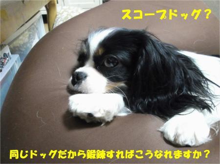 02_convert_20130412171922.jpg