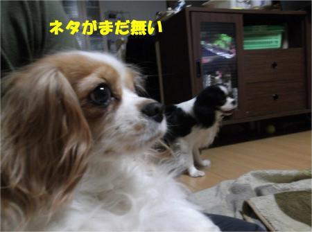 02_convert_20130416174053.jpg