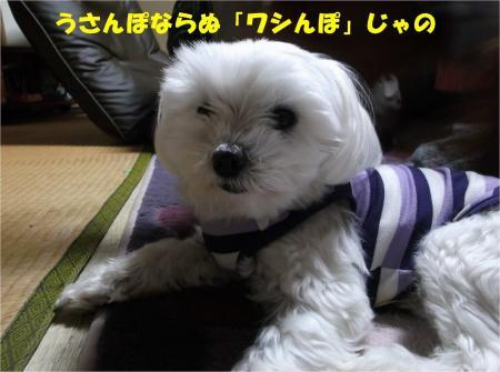 02_convert_20130510180838.jpg