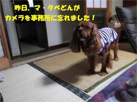 02_convert_20130514183048.jpg