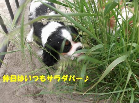 02_convert_20130603170004.jpg