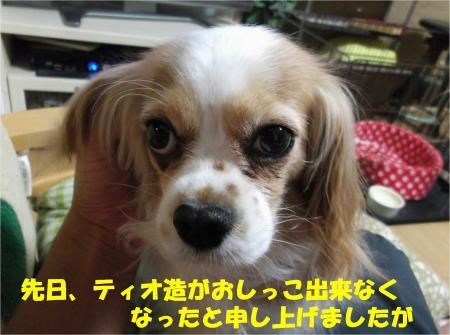 02_convert_20130607184437.jpg