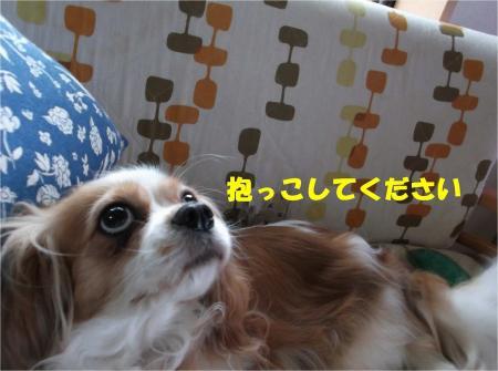 02_convert_20130614180217.jpg