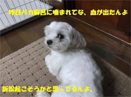 02_convert_20130724161244.jpg