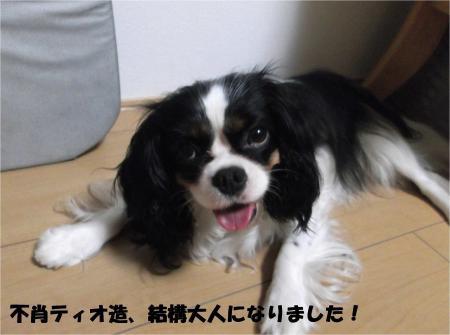 02_convert_20130807174434.jpg