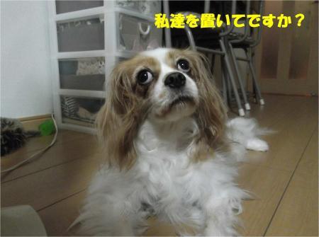 02_convert_20130812165031.jpg