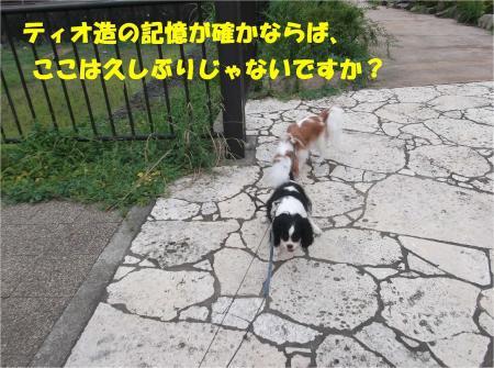 02_convert_20130907153925.jpg