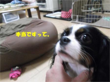 02_convert_20131002182546.jpg