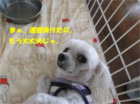 02_convert_20131005145959.jpg